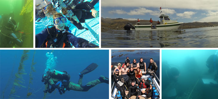 Collage of images from Scientific Diving courses at Cal Poly